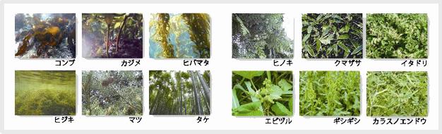 植物由来の原料